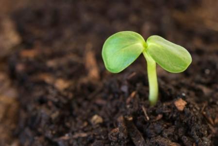 seedling-fertile-ground-carolynevans