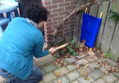 chopping axe vine